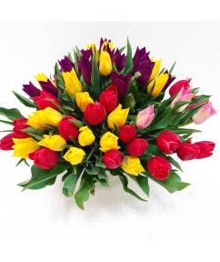 Тюльпаны 35 штук